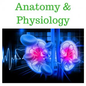 Anatomy & Physiology A & B